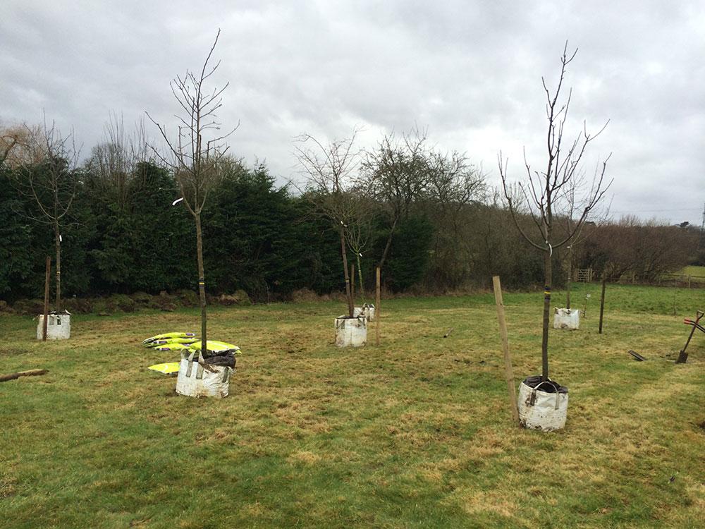 MAIN orchard 1