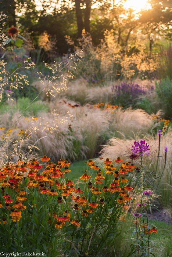 Winter Garden in Autumn sunshine